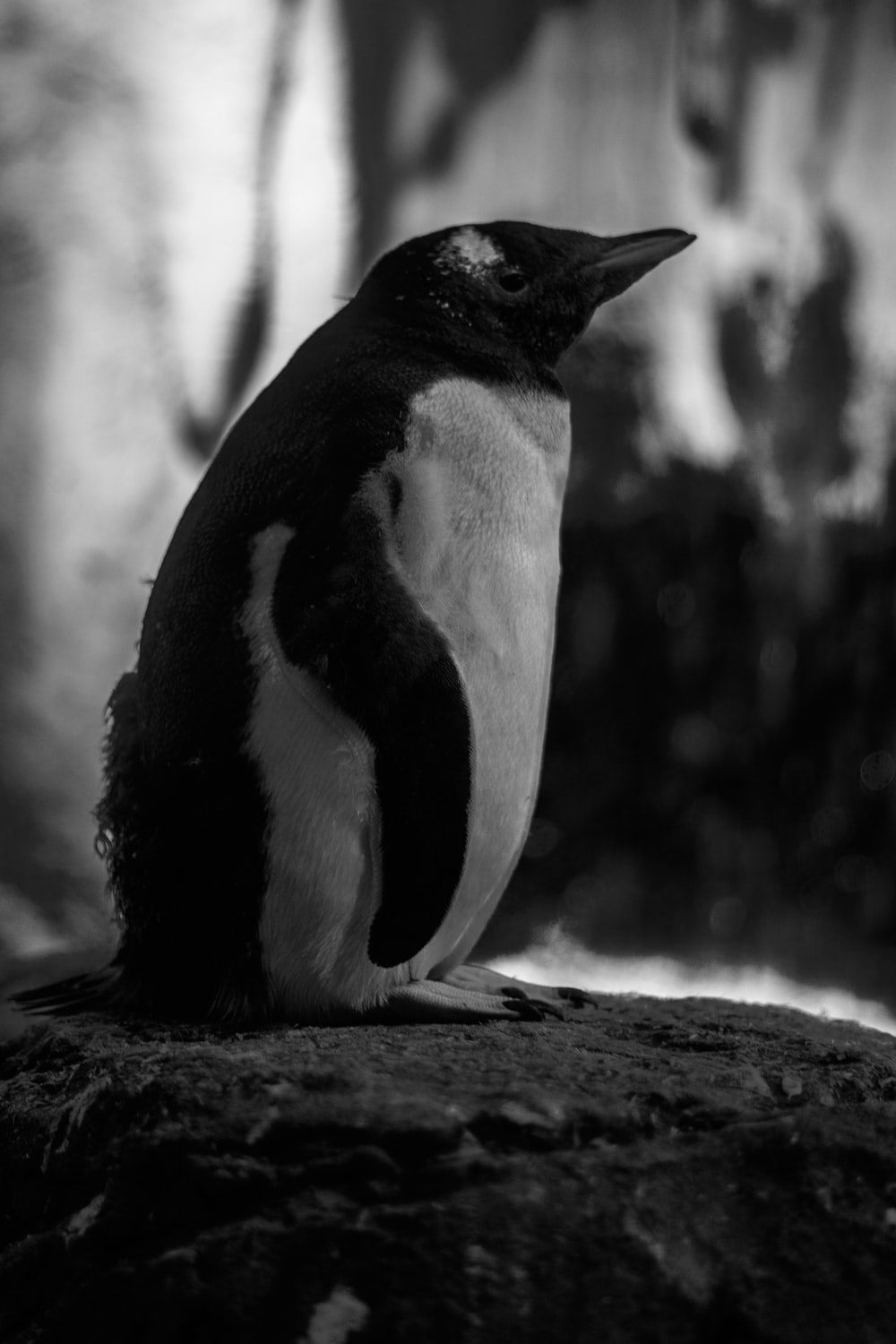 black and white penguin on brown wooden table