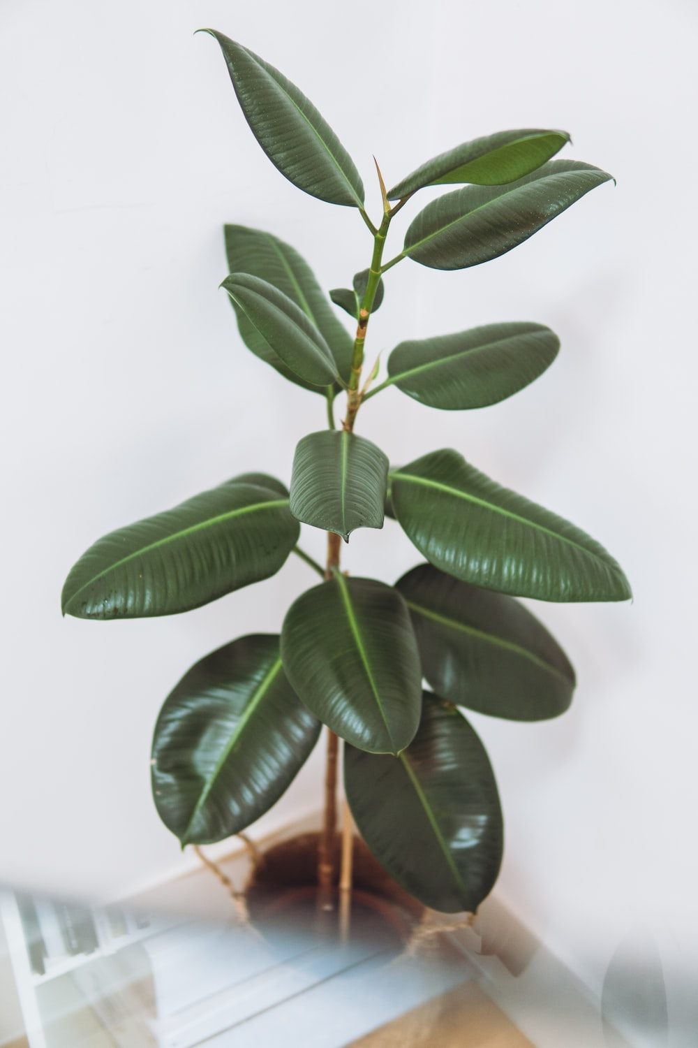 green leaves in white background