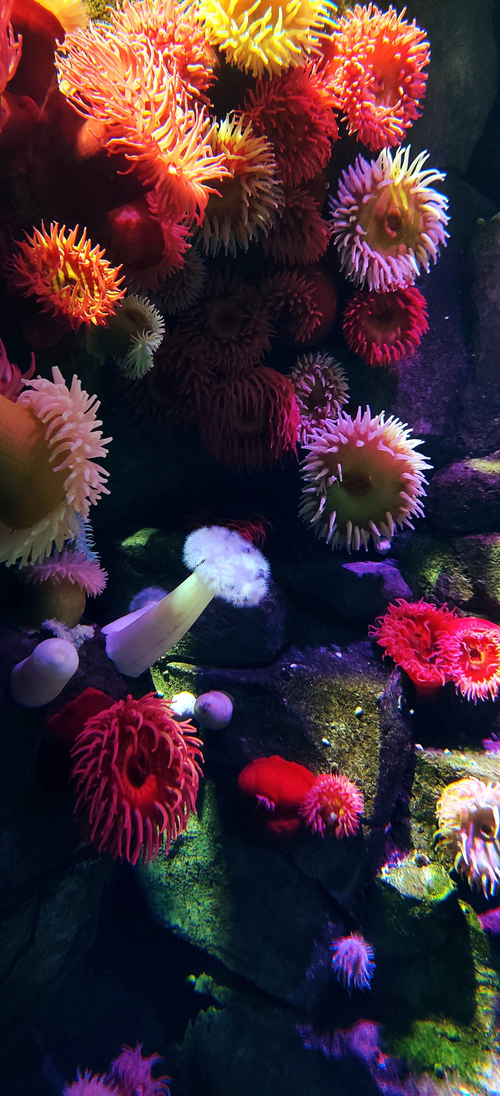pink and white coral reef