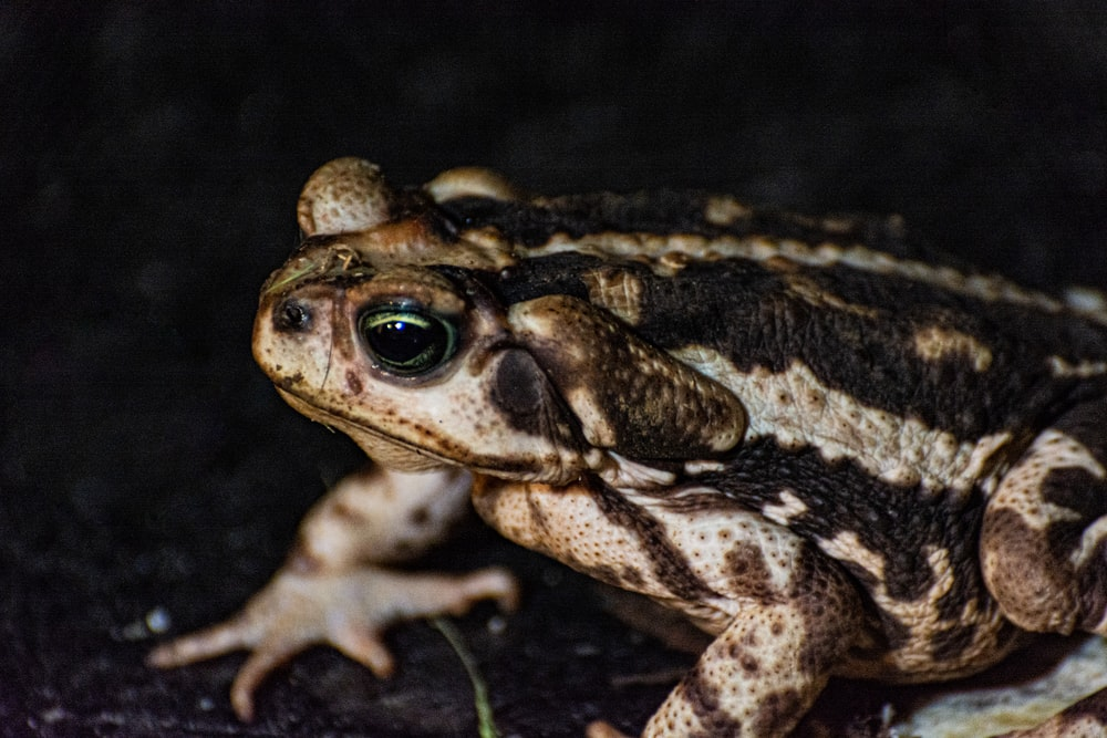 brown and black frog on green grass