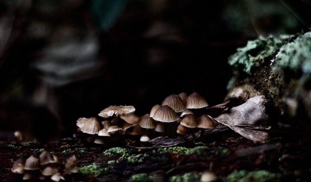brown mushrooms on brown soil