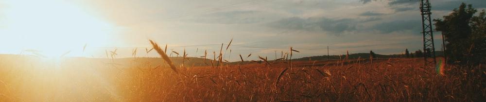 OXO.Farm header image