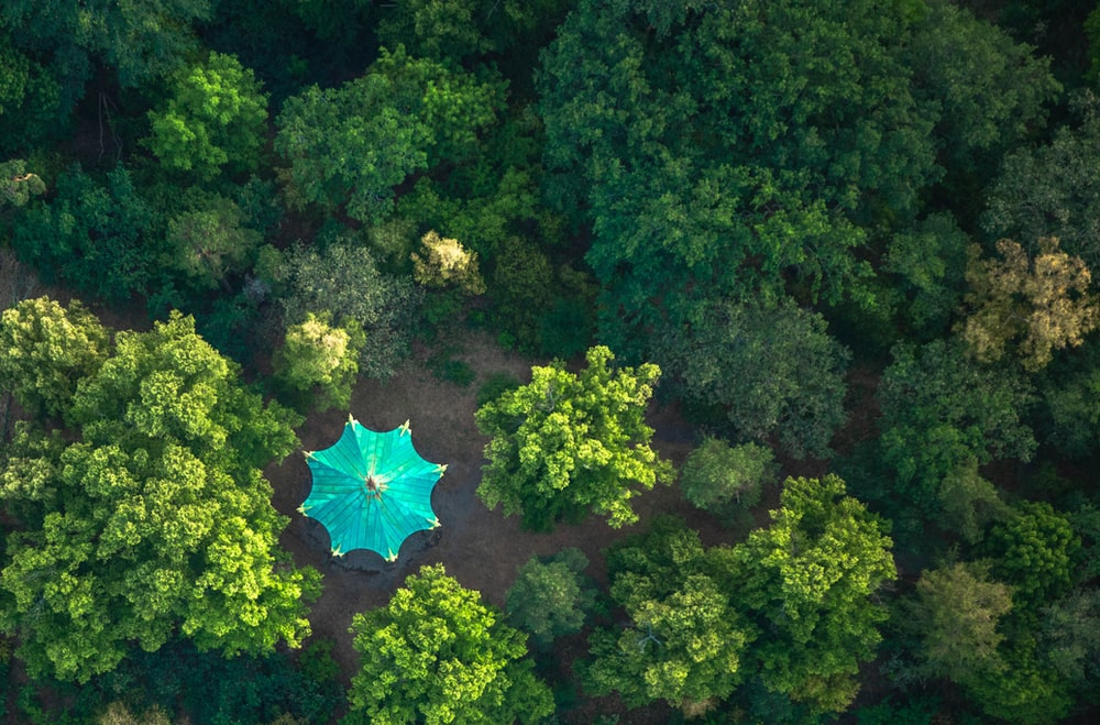 blue umbrella on green forest during daytime