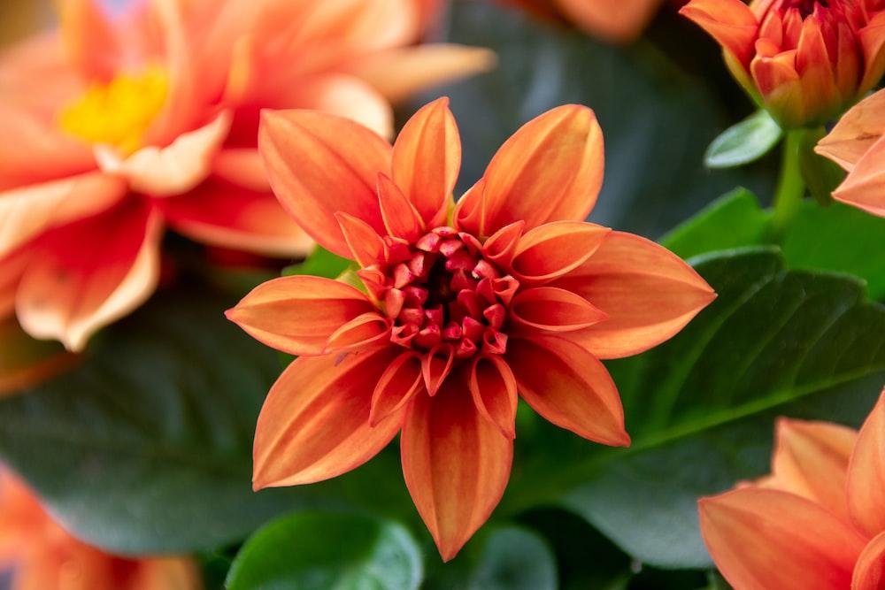 orange and yellow flower in macro shot