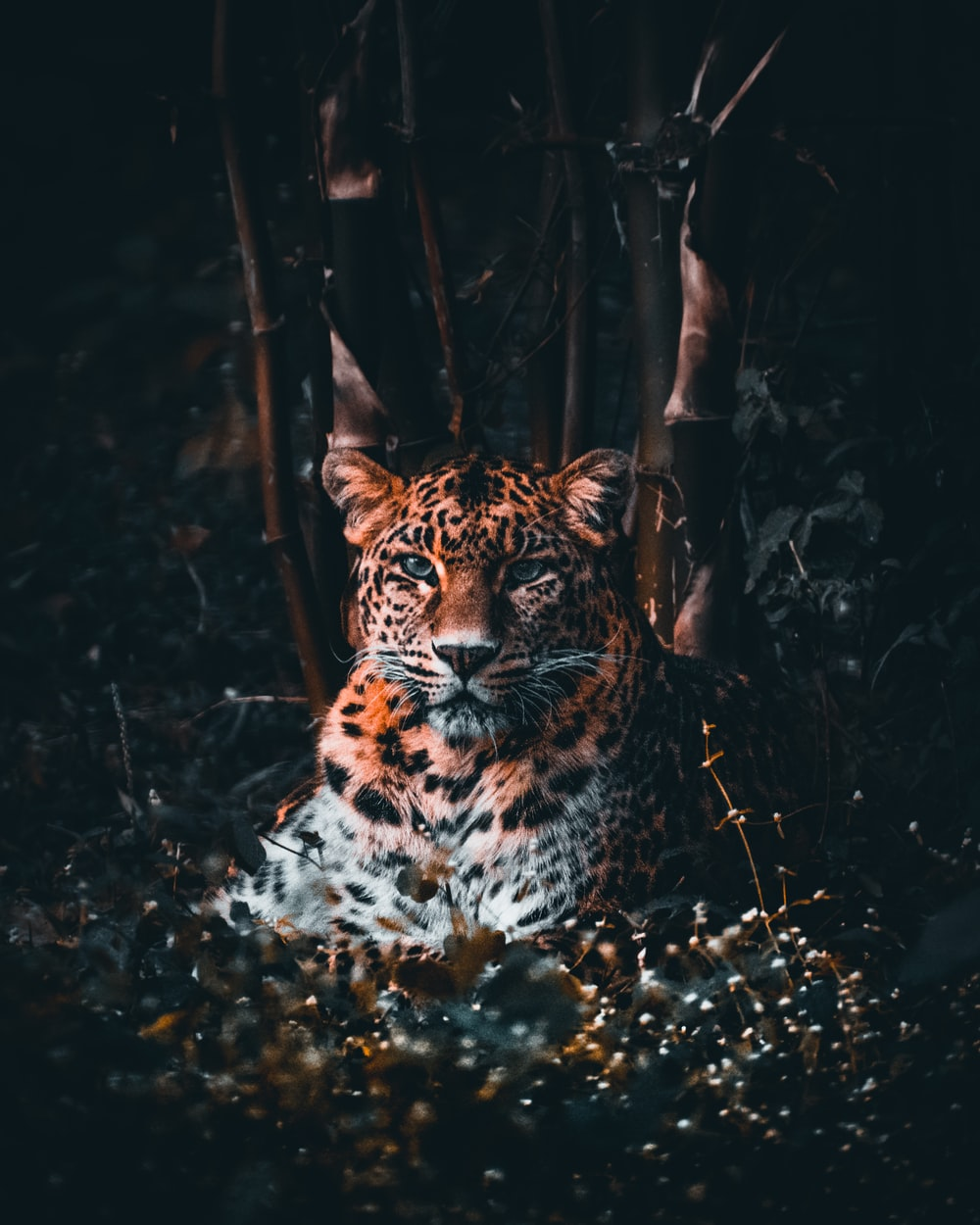 brown and black leopard in forest