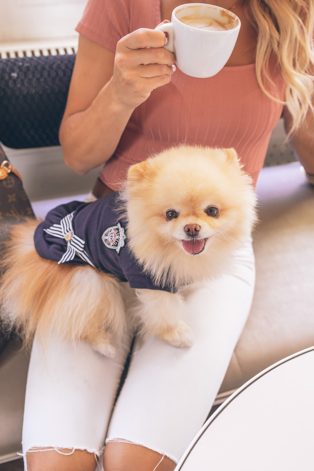 brown pomeranian puppy wearing black and white striped shirt