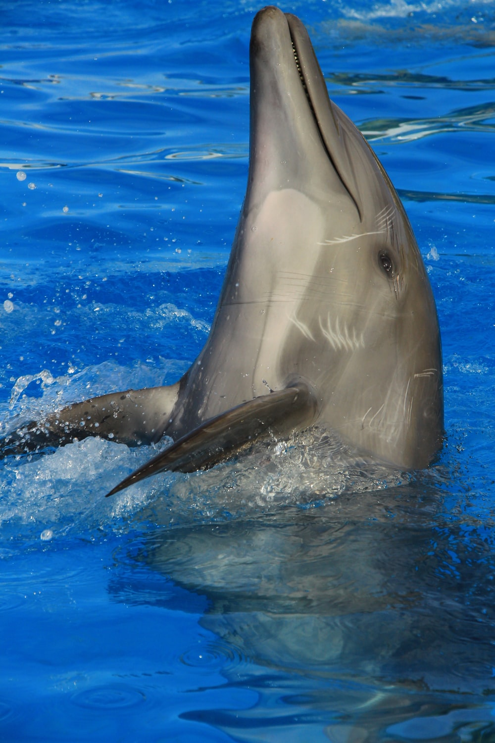gray dolphin in water during daytime