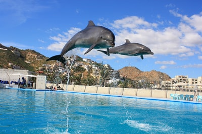 dolphin jumping out of water dolphin zoom background