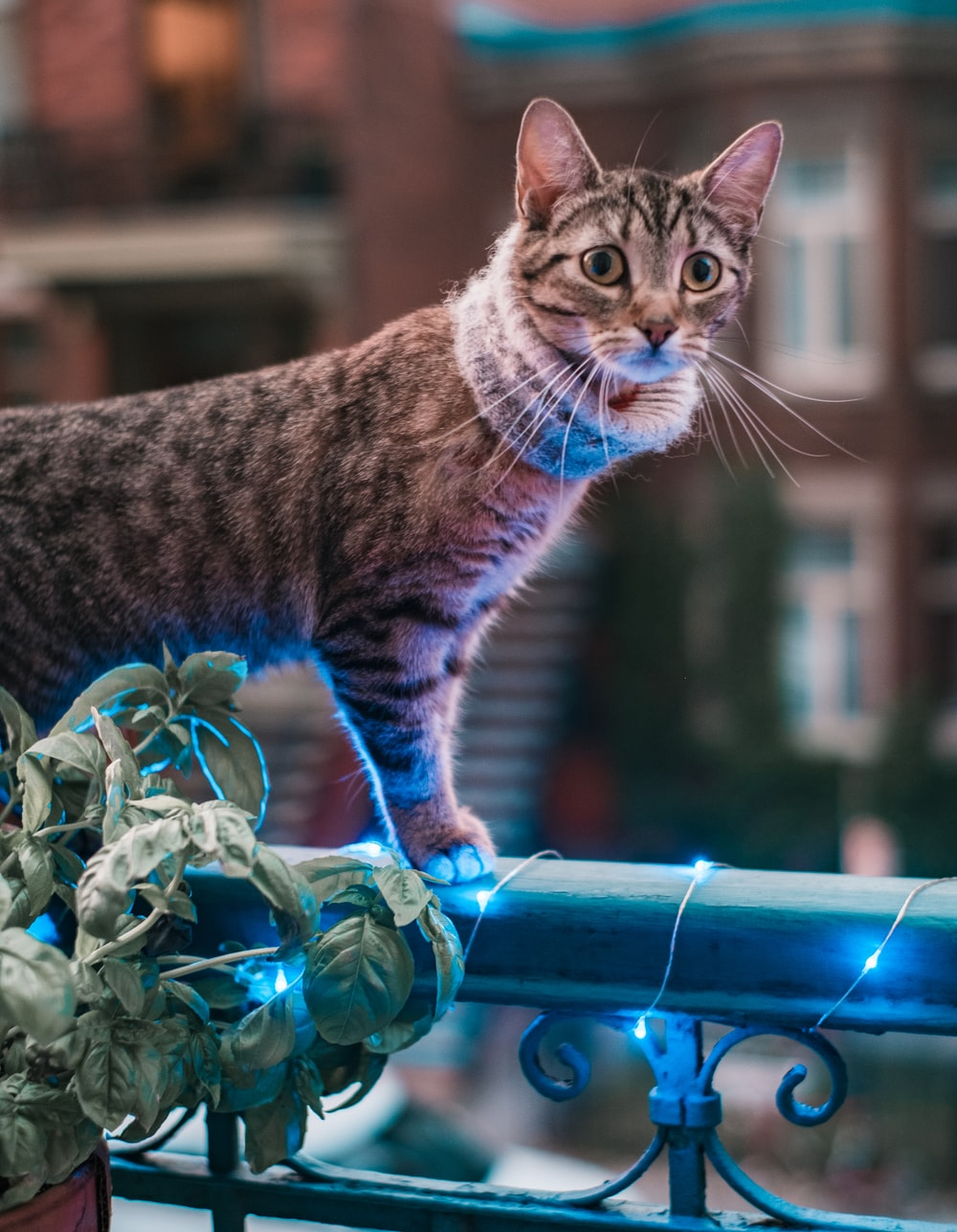 brown tabby cat on blue metal fence