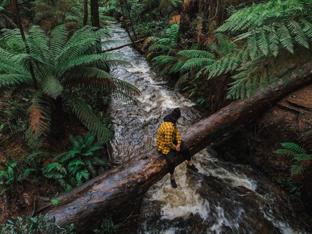 Redwood forest  Melbourne, Victoria