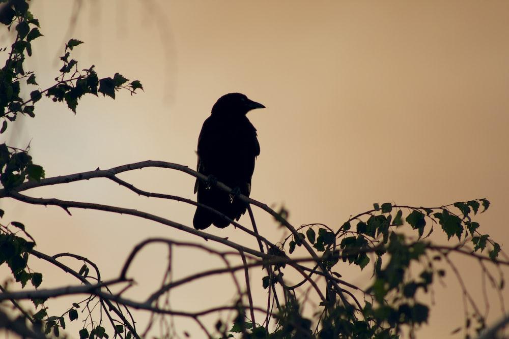 black crow on brown tree branch during daytime