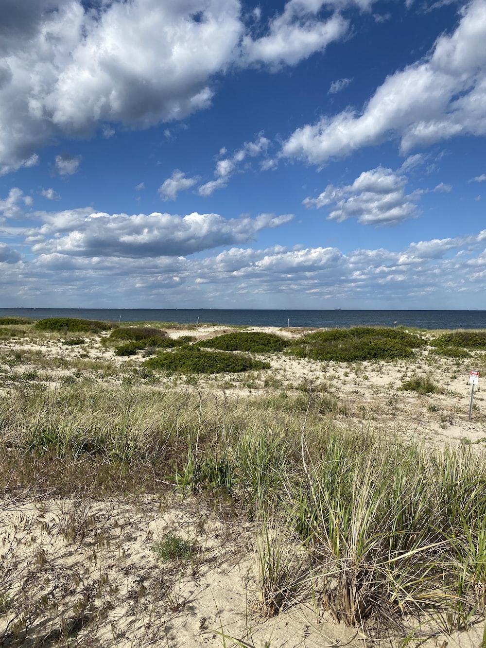 green grass on beach under blue sky during daytime
