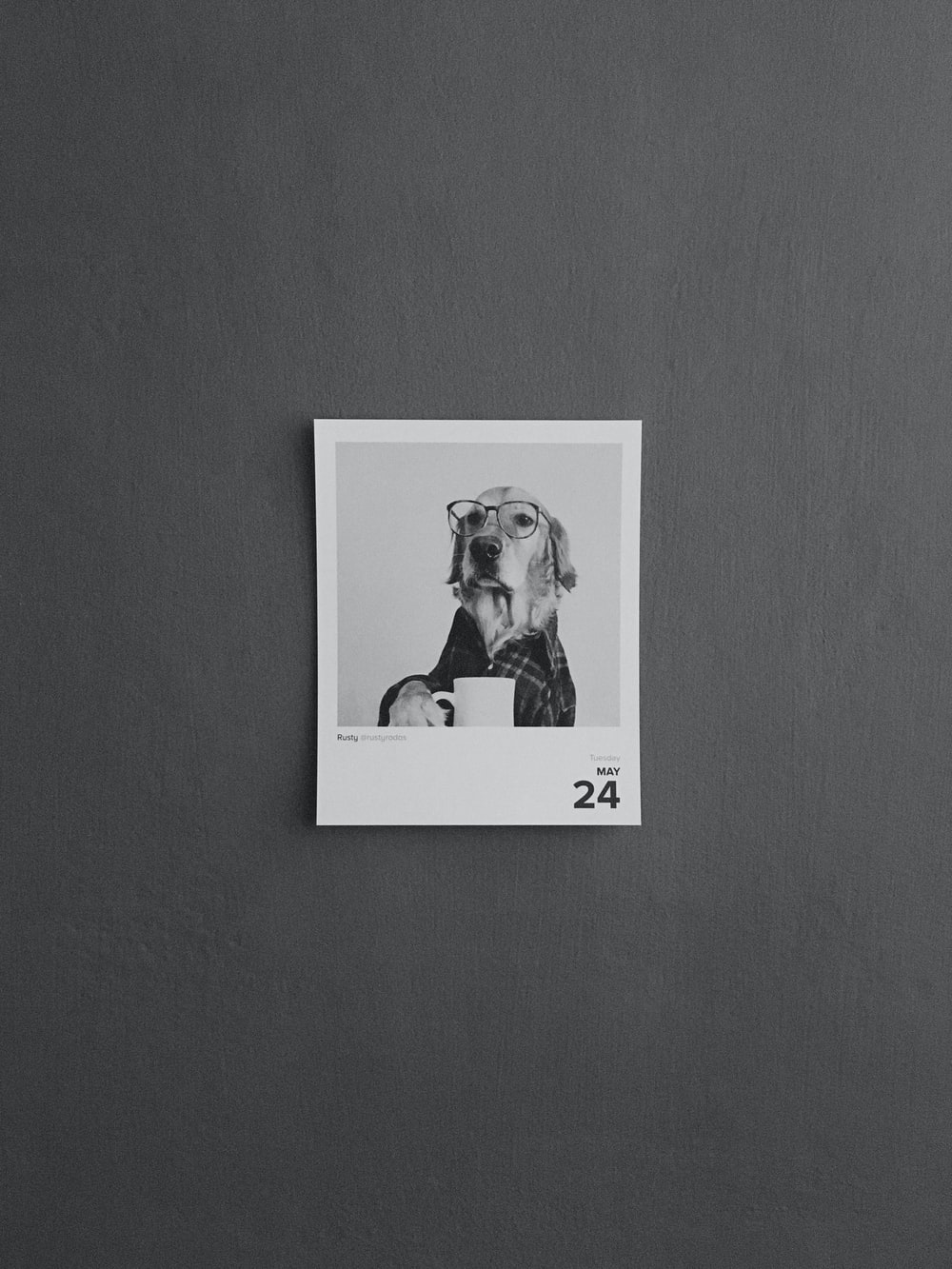 2 dogs in grayscale photo