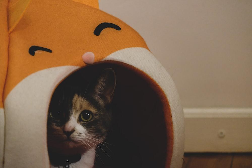 tuxedo cat in brown hat