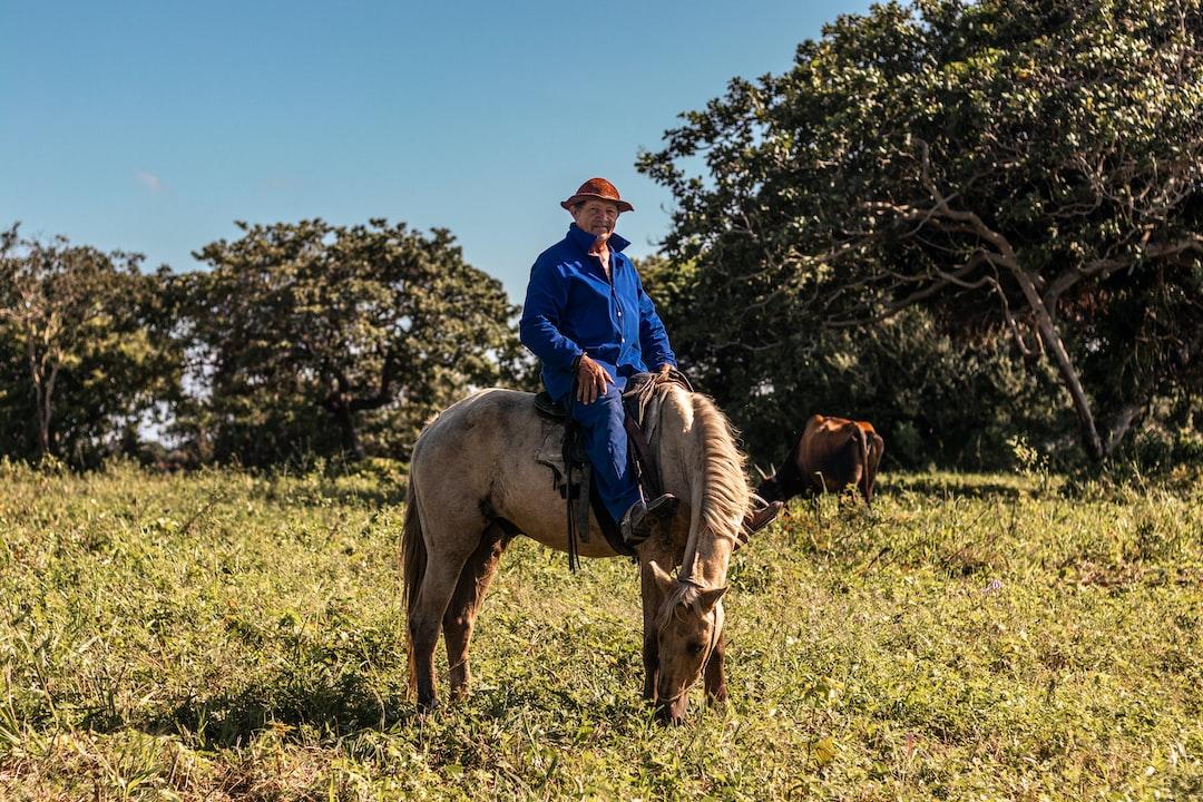 Um vaqueiro e seu cavalo.