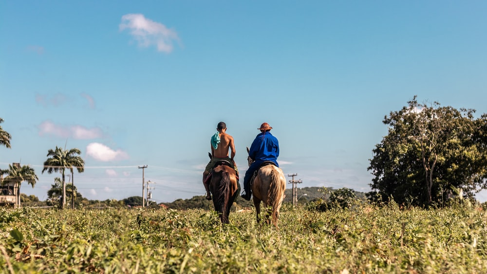 2 men riding horse on green grass field during daytime