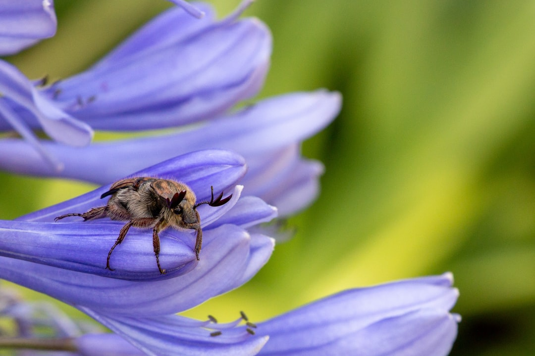 Macro Shot of and insect on a flower