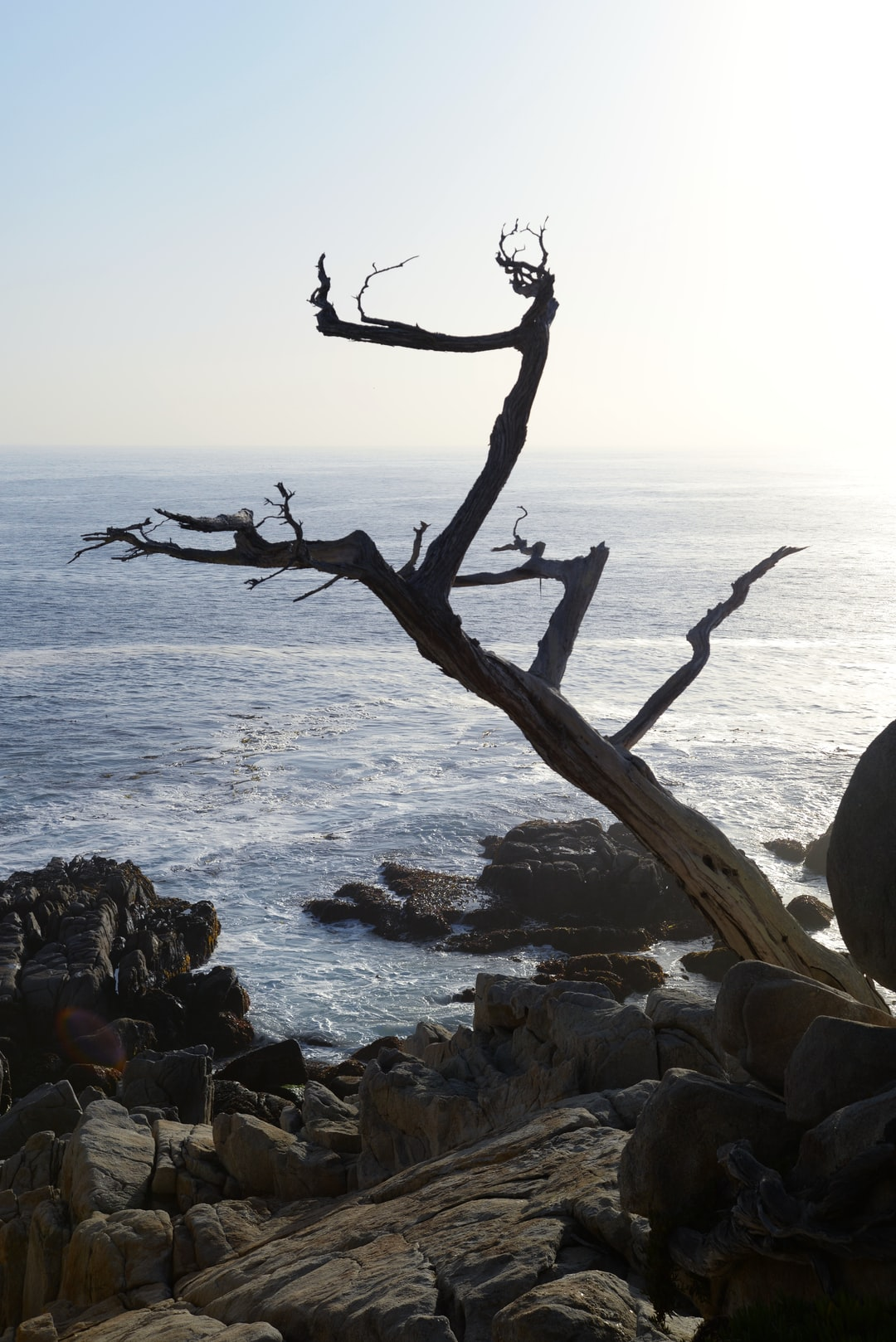Ghost Tree is one of the final points of interest along the 17 Mile Drive in Pebble Beach, California. The cypress trees for which the point is named are white and gnarled and haunting. Foresters predict that the few cypress trees still living in California will be killed by beetles over the next two decades.