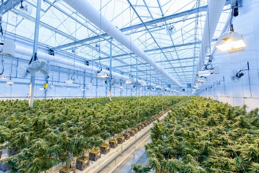 green plants on white metal frame