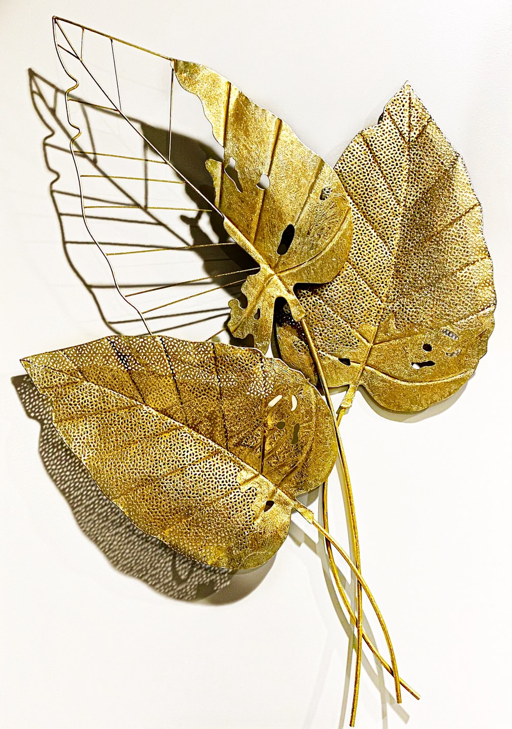 brown leaf with white background
