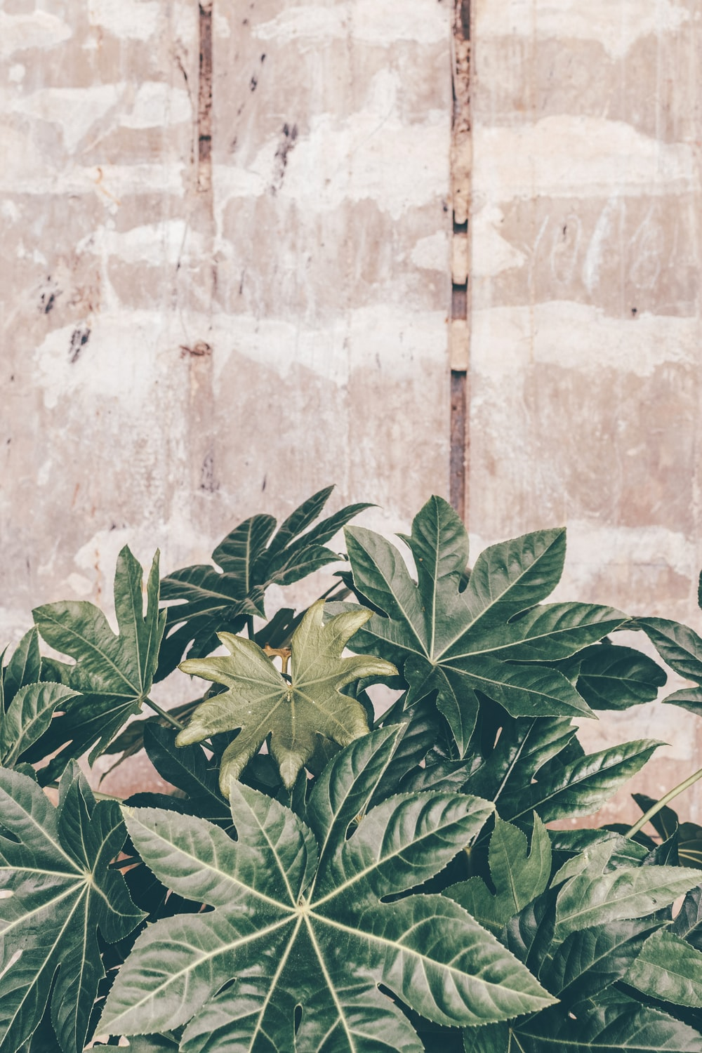 green leaves on brown concrete wall