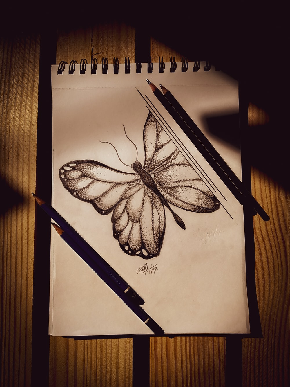 brown and black butterfly illustration