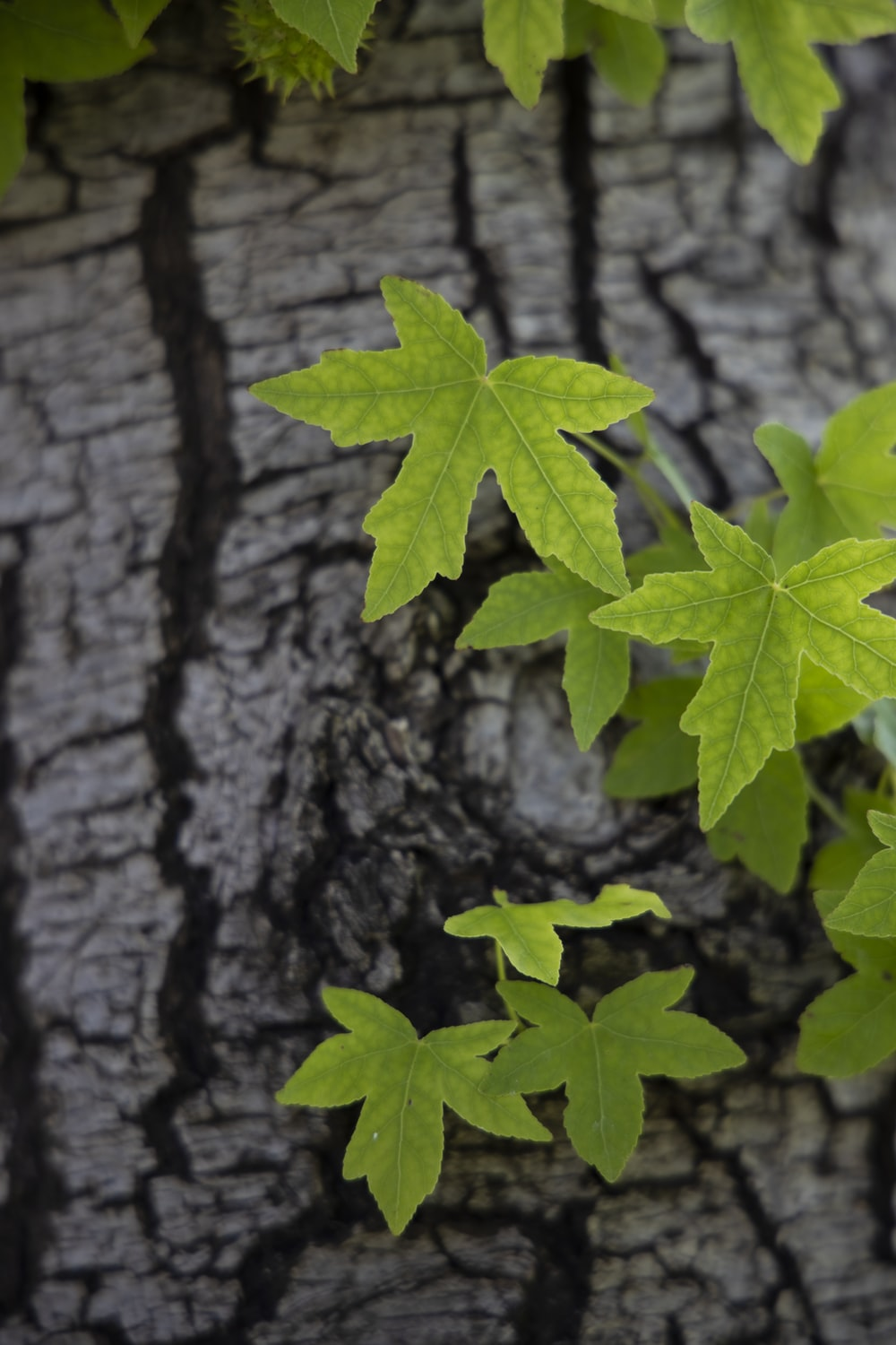 green maple leaf on brown tree trunk