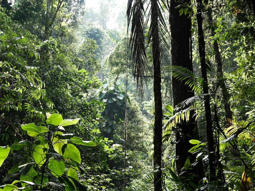 green banana trees during daytime