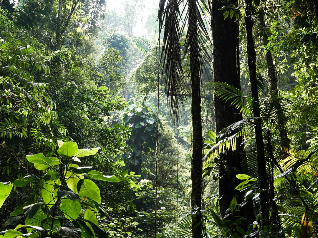 A photo from a walk in the rain forest, close to the Research station La Gamba.   www.oleli.live