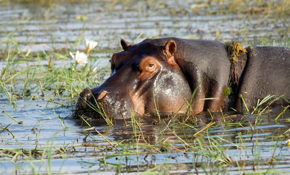 brown leather animal on water during daytime