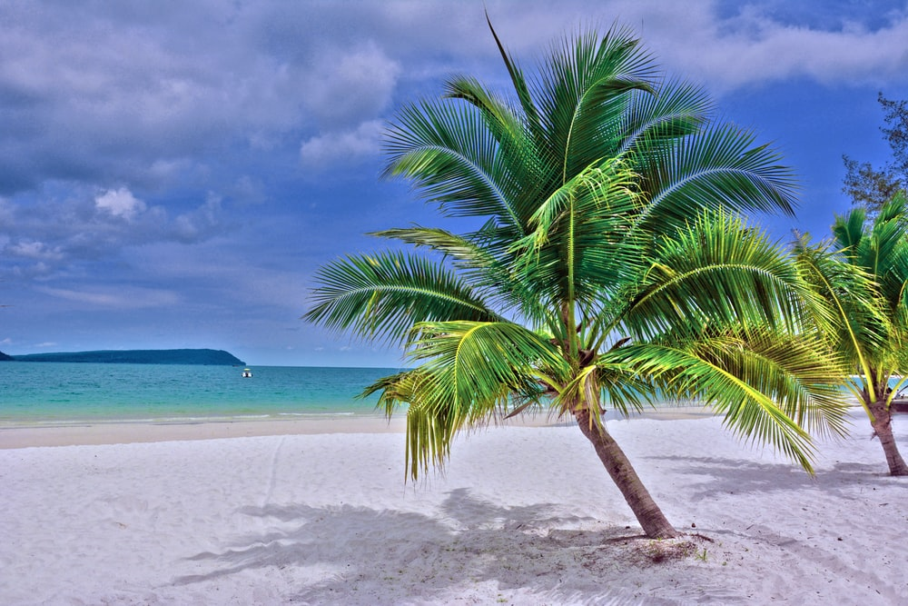green palm tree on white sand beach during daytime