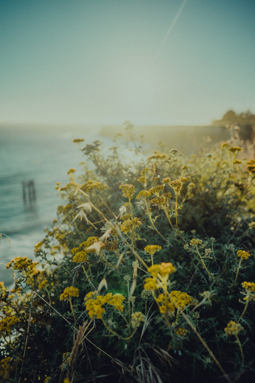 yellow flowers near body of water during daytime