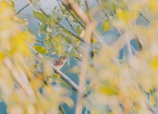 brown bird on green tree during daytime