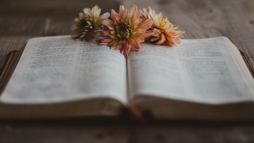 orange flower on book page