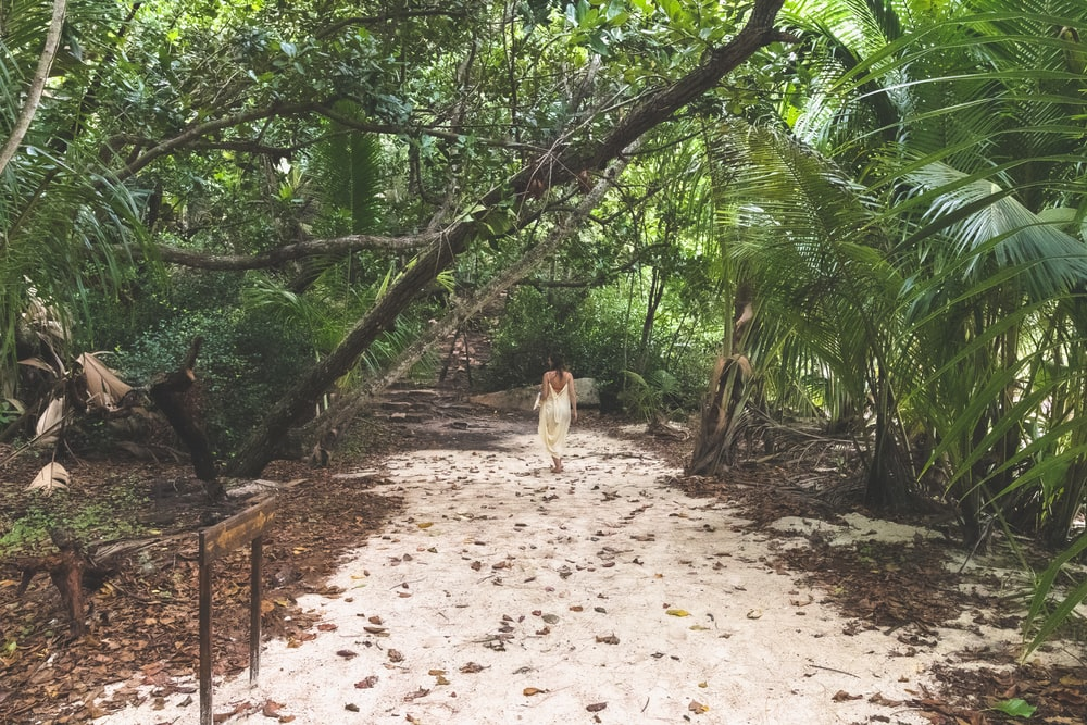 white and brown short coated dog walking on brown dirt road during daytime