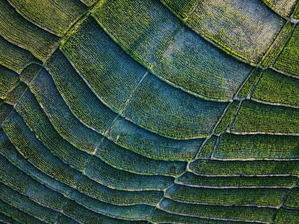 green and black textile in close up photography