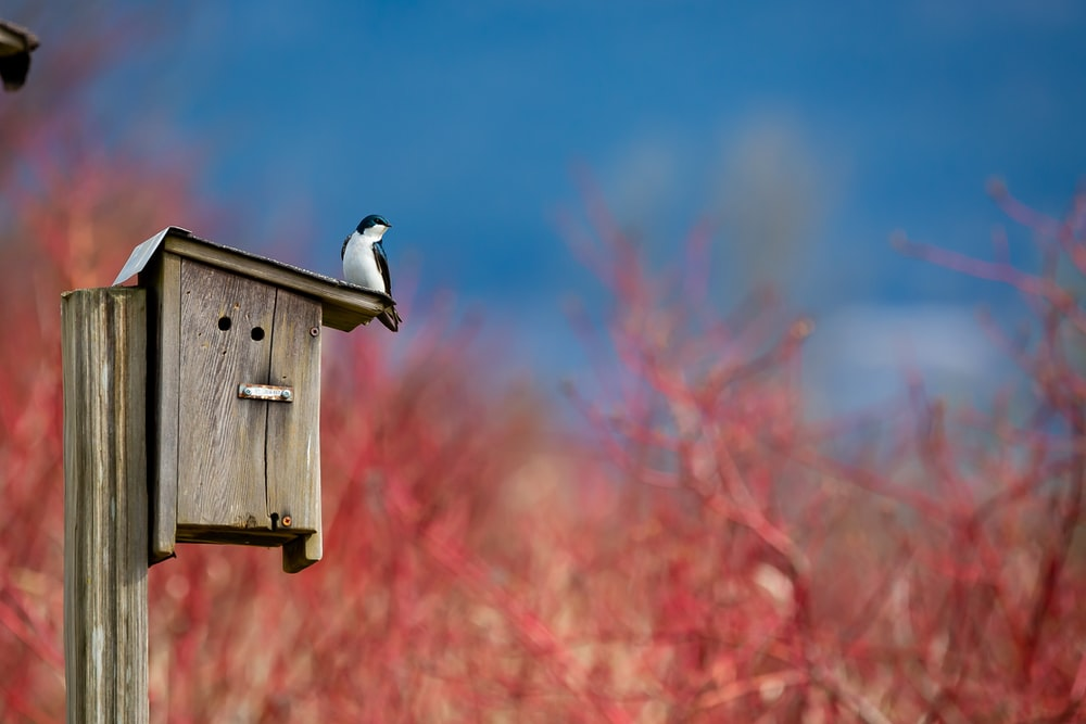 white and black bird on brown wooden bird house