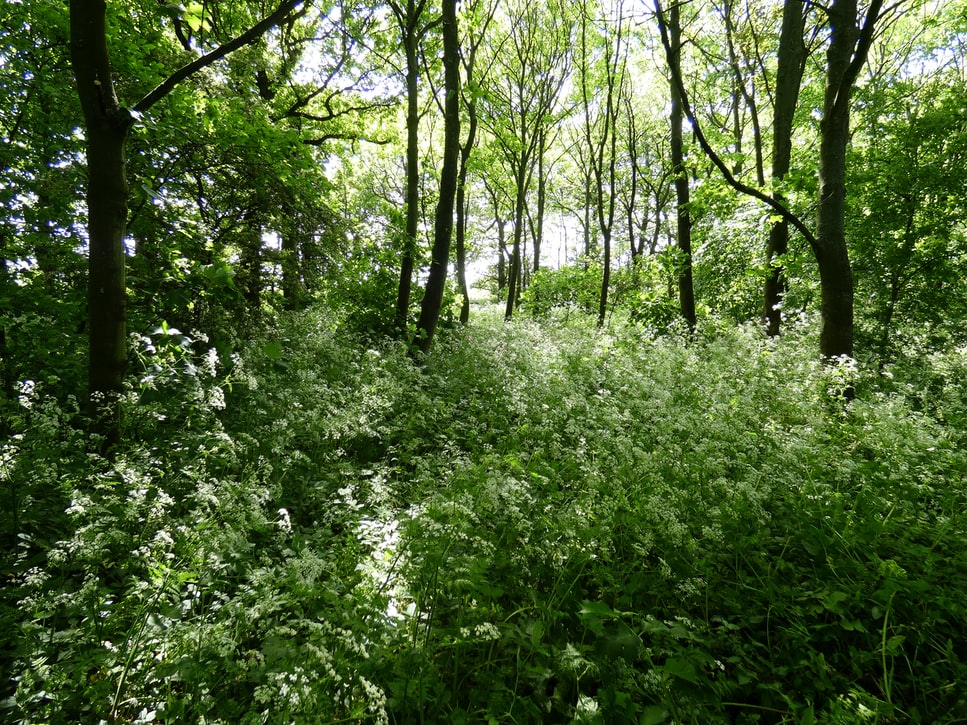 Bois Beckett Forest