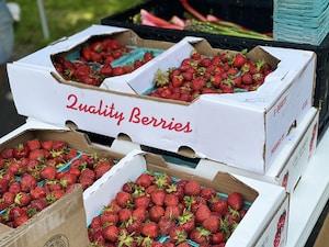 strawberries in white cardboard box