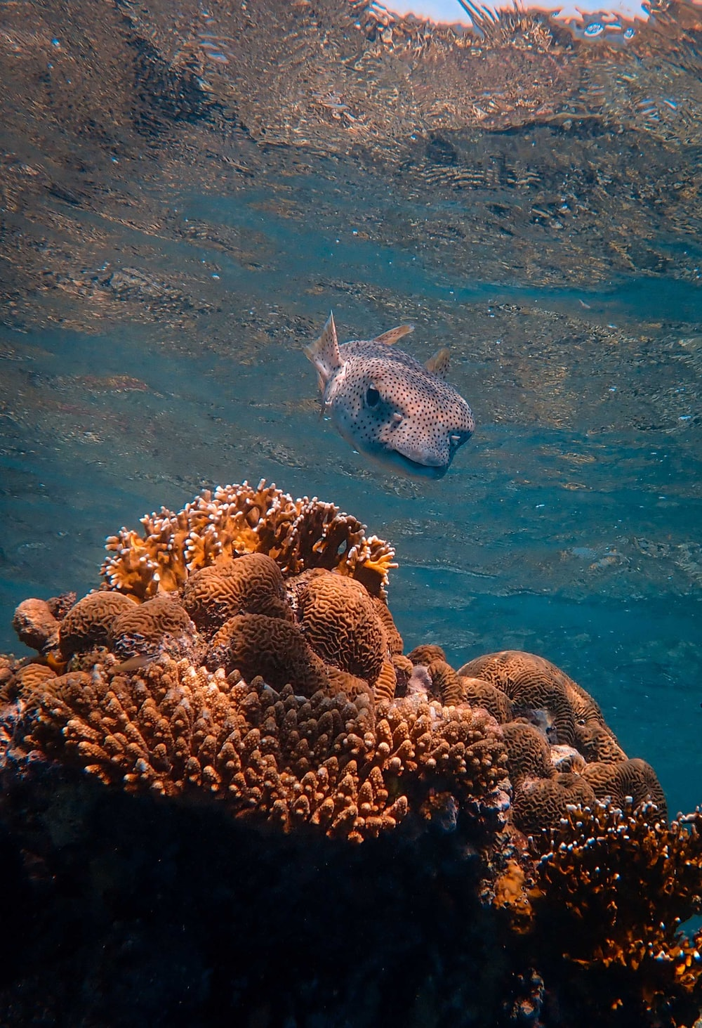 white and black fish on coral reef