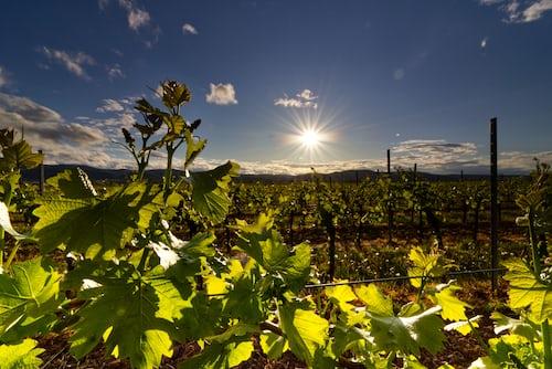Was hat das Recruiting mit dem Weinbau zu tun?