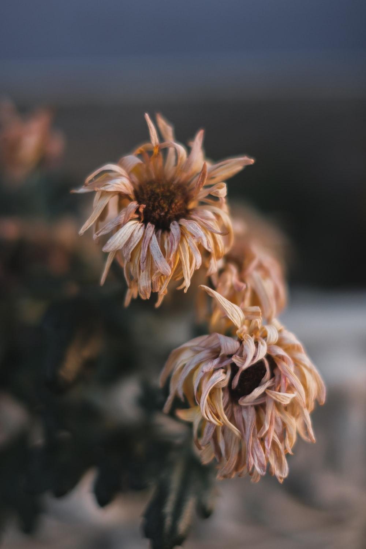 white and brown flower in tilt shift lens