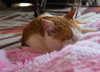 orange and white tabby cat lying on pink and white textile