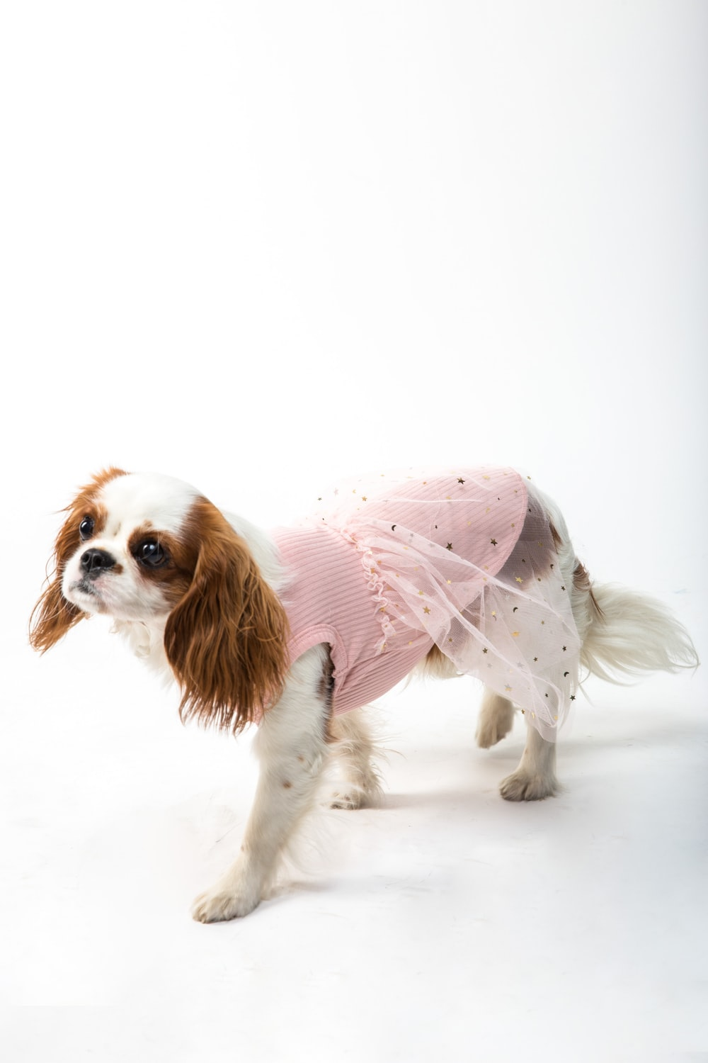 white and brown long coated small dog wearing pink dress