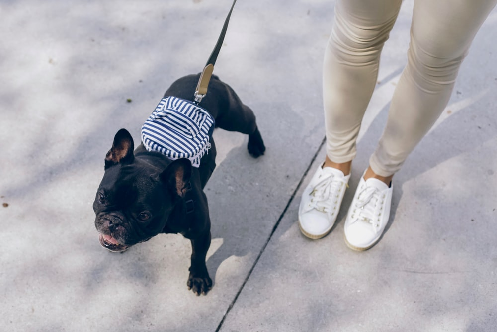 black pug with white and black striped shirt and white pants