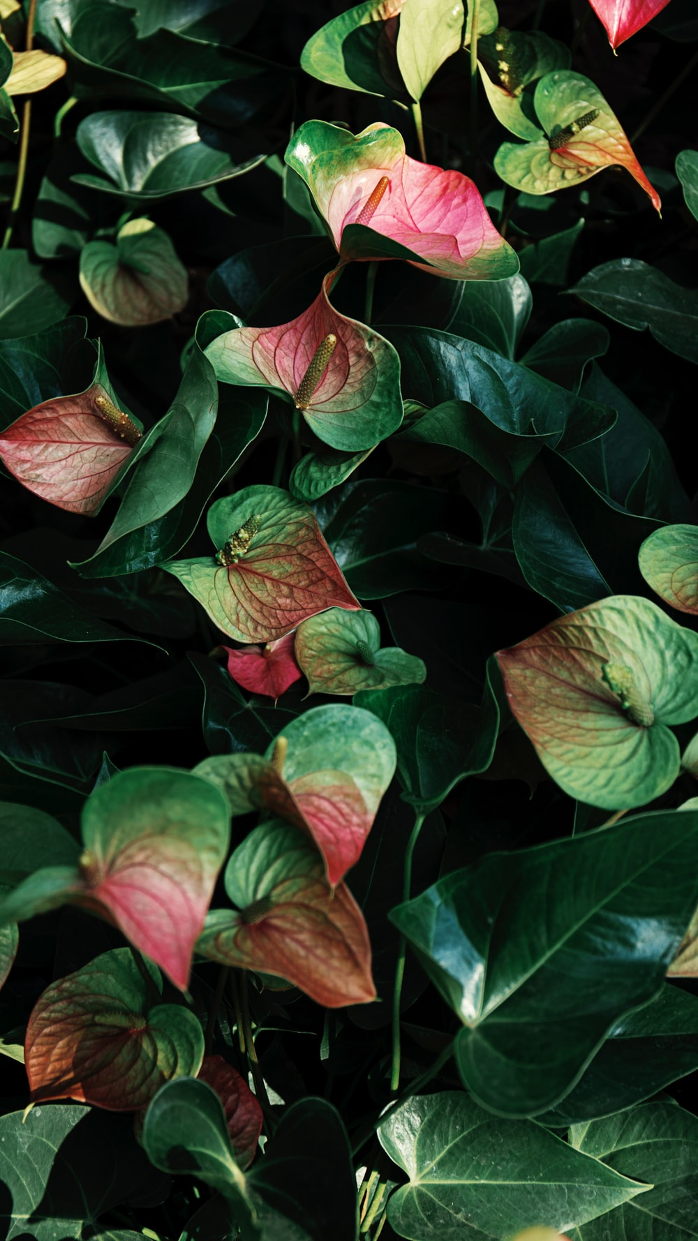 red and green leaves plant