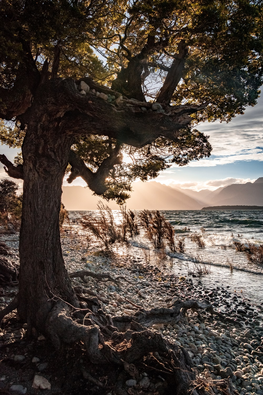 brown tree trunk on seashore during daytime