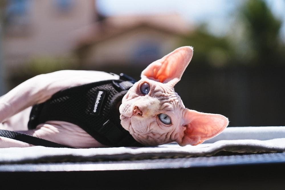 orange tabby cat lying on black and white nike athletic shoes