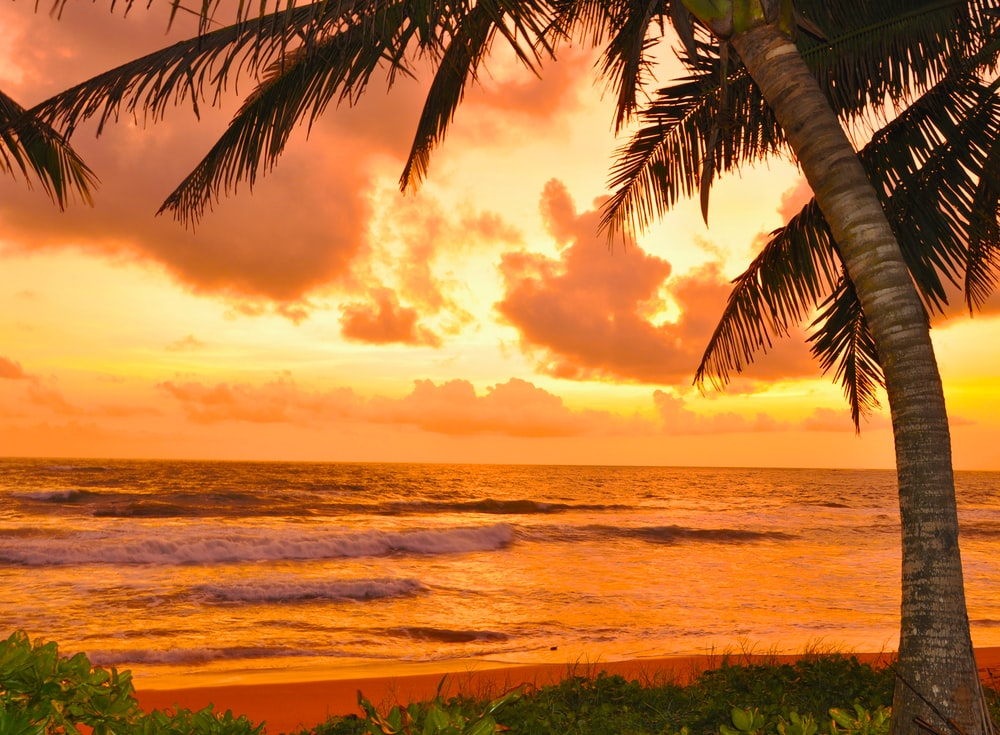 coconut tree near sea during sunset