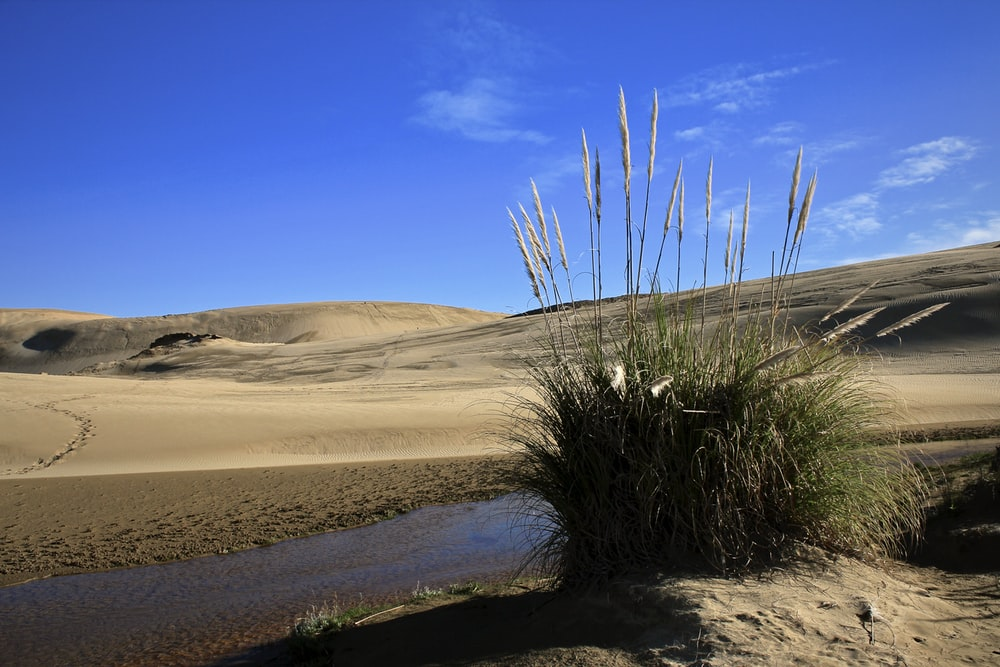 green grass on brown sand near body of water during daytime